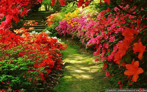 flower gardens wallpapers 183