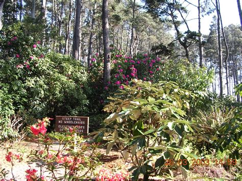 fort bragg botanical garden panoramio photo of botanical gardens fort bragg