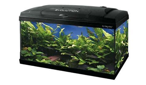 acquario per casa come arredare acquario acqua dolce casa piantine pesci