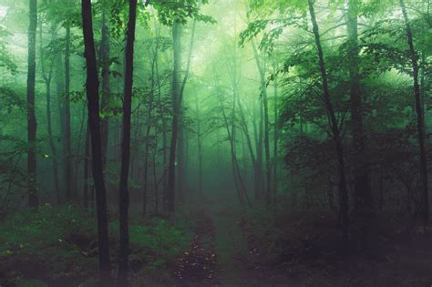 enchanted forest background stock enchanted forest pre made background by