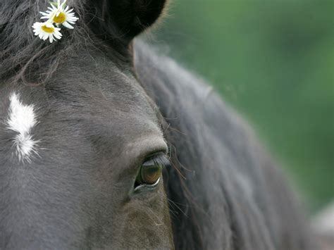 wallpaper for desktop of horses horse pics for backgrounds wallpaper cave