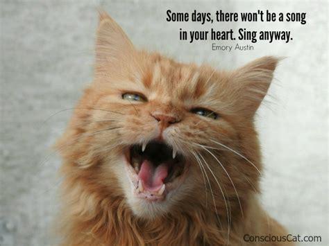 sunday quotes sing  conscious cat