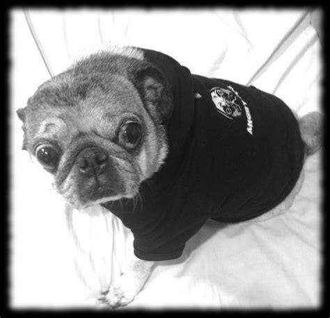 angry pugs fleece hoodie with angry pug logo angry pug sportswear