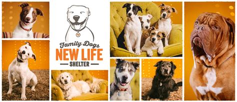 family dogs new family dogs new shelter 187 happy endings