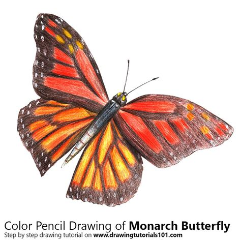 monarch color monarch butterfly colored pencils drawing monarch