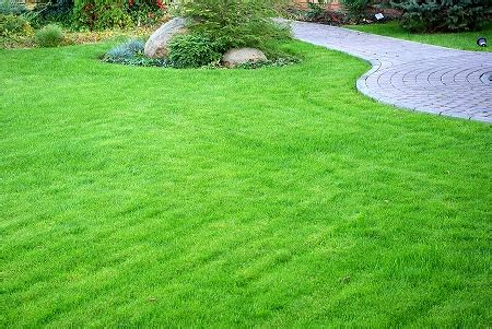 Course On Lawns What You Should by Beautiful Green Lawn