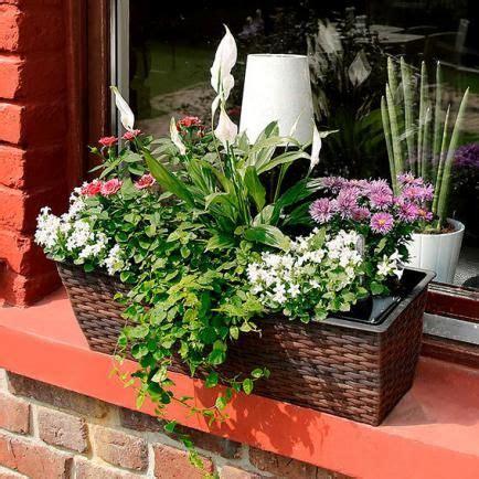 Pflanzen Am Balkon 3396 by 66 Besten Blumenk 228 Sten Dekorieren Bilder Auf