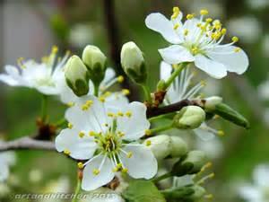 boutineer flowers cherry flower artandkitchen