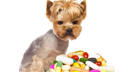 can puppies take benadryl can you give a benadryl benadryl can be safe for dogs