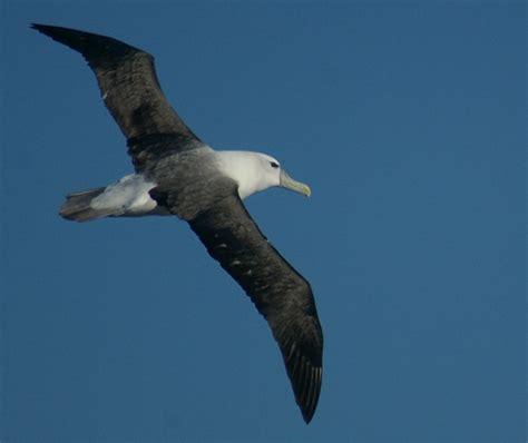 kay parkin birding pelagic birding