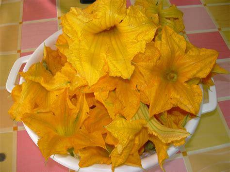 cucinare fiori di zucchine fiori di zucca in padella ricetta