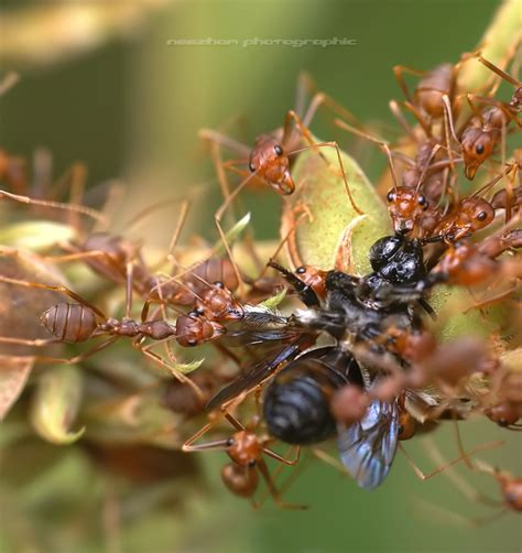 what eats bed bugs assassin bug eating spider