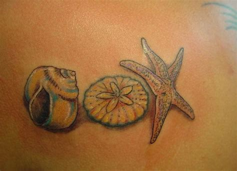 sand dollar tattoos designs seashell tattoos for skydragon dreams