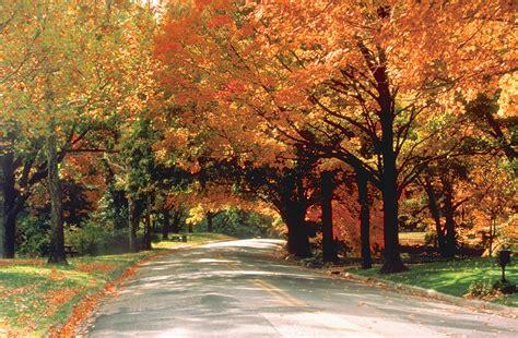 fall foliage stock images naper design naperville web