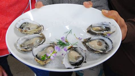 Confidence Oyster growing confidence in angasi oyster port lincoln times