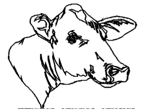 coloring page cow head pin cow head colouring pages on pinterest