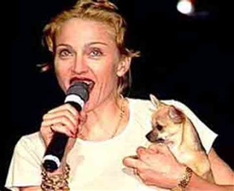 Madonna Asked For Adoption Advice by Couture Madonna With Chihuahua Chiquita