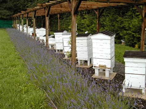five considerations for setting up an apiary or bee yard