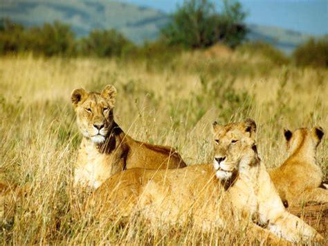 kumpulan foto binatang buas shofyan