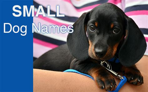 small puppy names names great ideas for naming your puppy the happy puppy site
