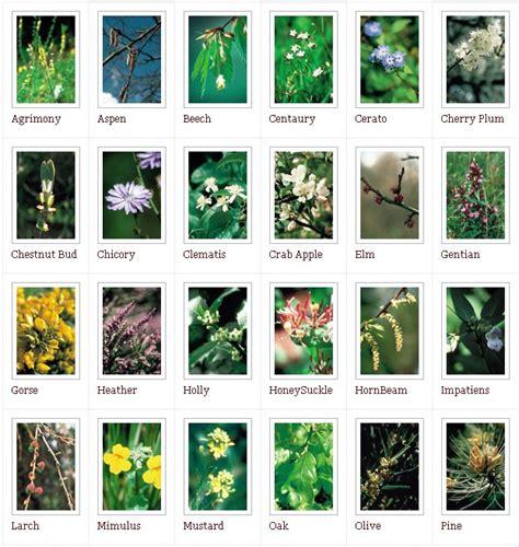 i 38 fiori di bach contatti il giardino dei fiori di bach