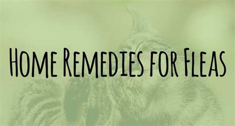 home remedies for fleas on cats being catty