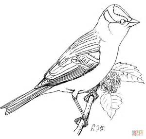 coloring page of house sparrow perched white crowned sparrow coloring page free