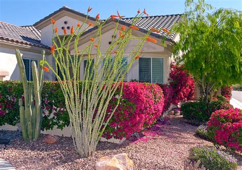 flowers for desert landscaping pictures to pin on