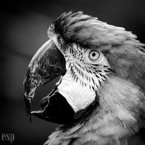 how to make a black and white photo color how to make your black and white photography amazing