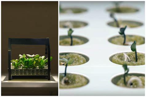 krydda v xer series ikea s indoor gardening series will make your garden