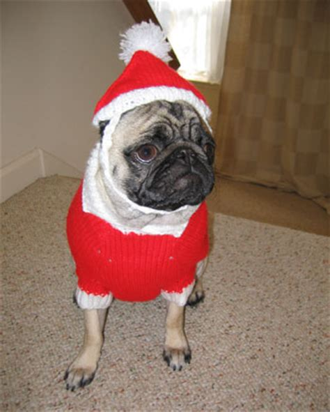 pug in santa costume pug in a santa suit winnie wong flickr