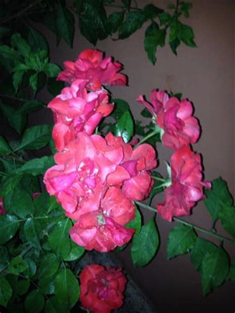 fiori in villa modena agriturismo fiori in villa modena ristorante recensioni