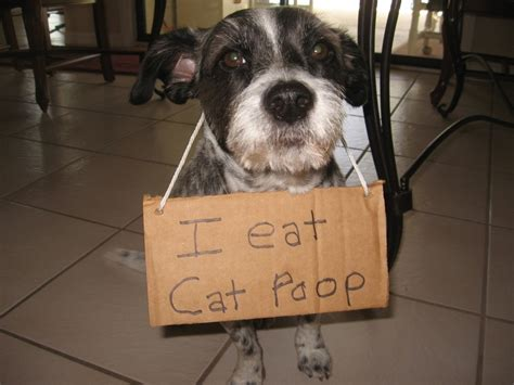 older dog pooping in house dog shame i eat cat poop cute animals pinterest
