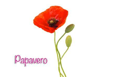 solitario dei fiori papavero silhouette donna