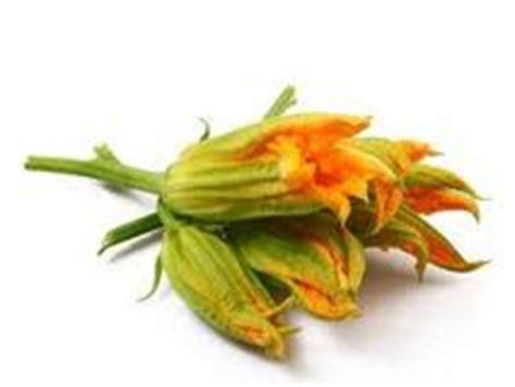 fiori di zucca pianta il fiore di zucca