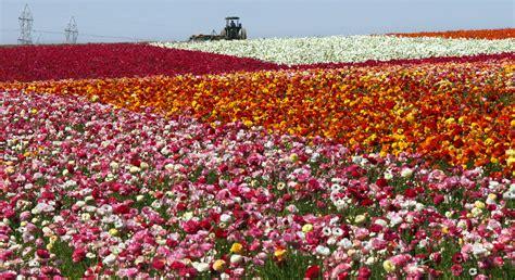 Carlsbad Flower Garden Flower Garden Carlsbad Carlsbad Flower Garden Alices Garden Gardensdecor