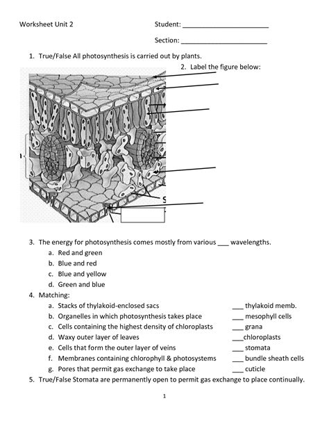 Photosynthesis Energy Worksheet by 12 Best Images Of Photosynthesis Diagrams Worksheet Answer