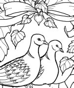 turtle dove coloring page how to draw 2 turtle doves