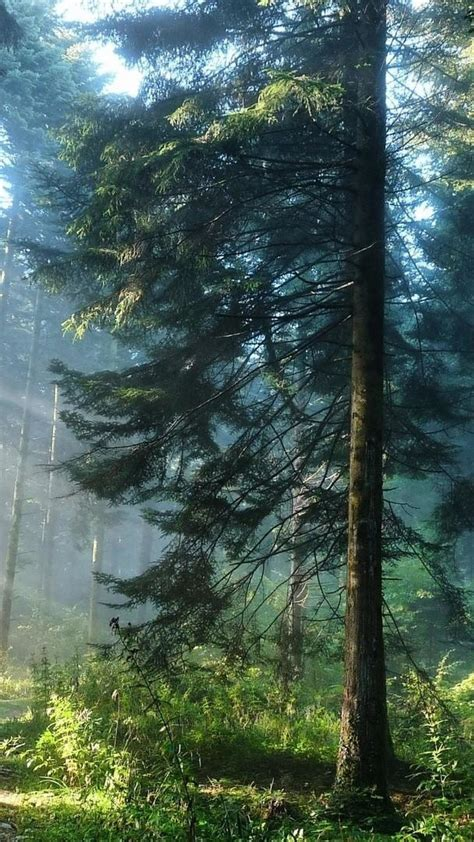 forest hd wallpapers  galaxy  wallpaperspictures
