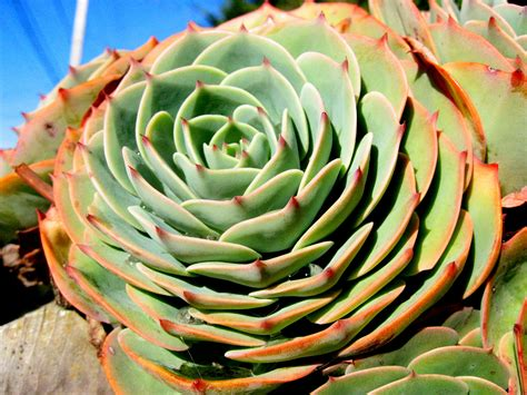 succulent facts interesting facts about the cactus plant bayside journal