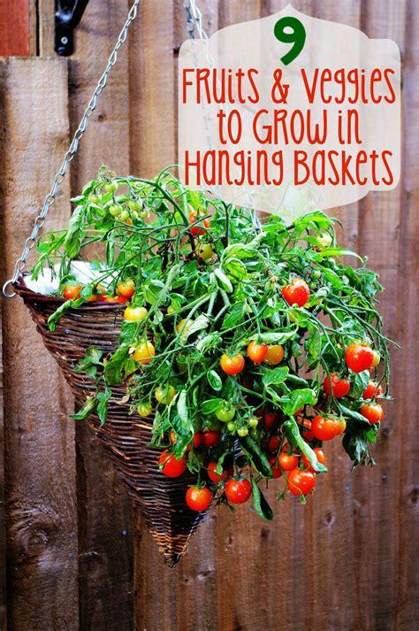 fruits  veggies  grow  hanging baskets learn