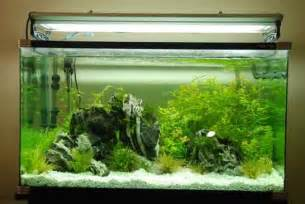 Beginner s guide to setting up your first aquarium