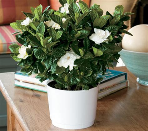 fragrant indoor plants home the pottery post terracotta pots wholesale