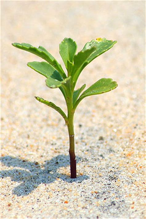 small plant iphone a small plant free wallpaper a small plant iphone