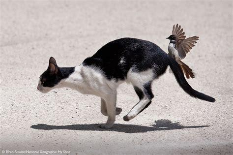 bird attacks cat funny cat vidios youtube