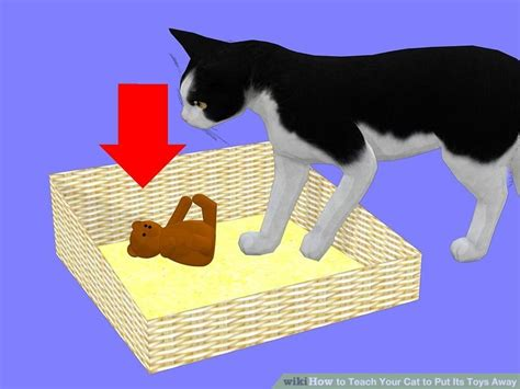 how to to put toys away how to teach your cat to put its toys away 9 steps