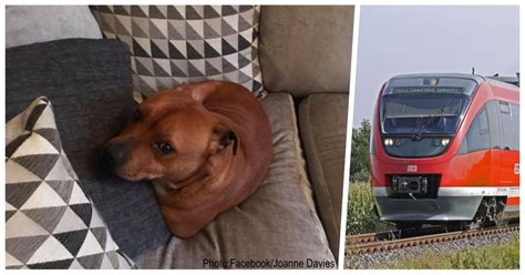 dog escapes backyard dog escapes backyard and heads straight for the train