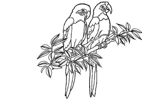 coloring pages of birds in the rainforest two rainforest bird coloring page download print