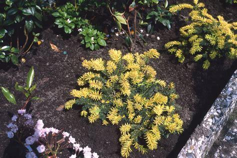 blumen für den garten pflegeleicht grabbepflanzung die richtigen blumen f 252 r den friedhof
