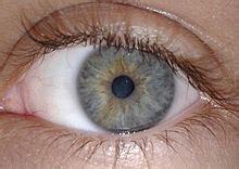 how many colors can the human eye distinguish eye